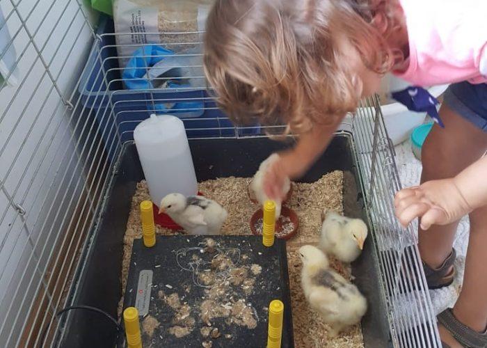 Vom Ei zum Huhn